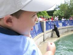 Sea Lion show