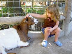 Ava & Goat