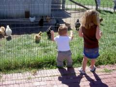 Chickens, Josiah & Ava