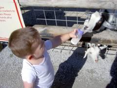 Goats & Josiah